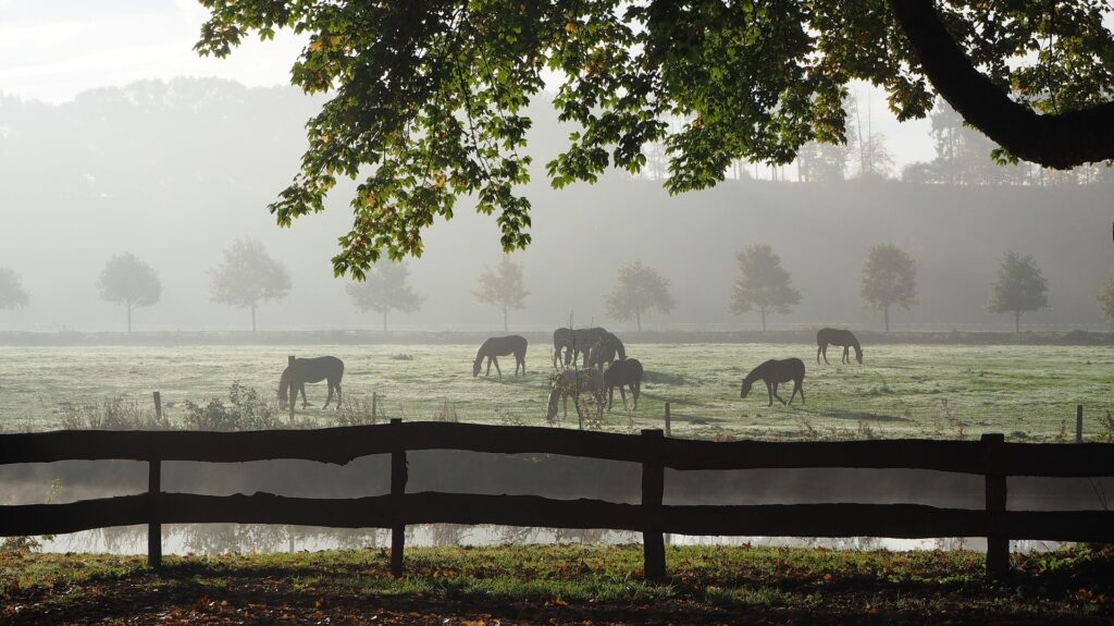 Herbst Pferde